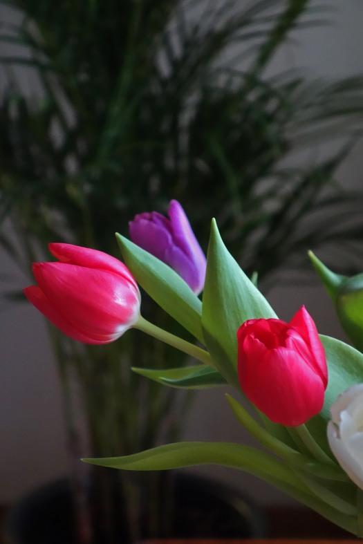 Tulppaanit2